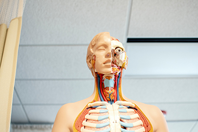 Anatomy/Physiology Resources